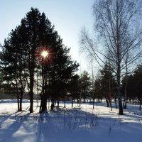 Зимнее солнце :: Вик Токарев