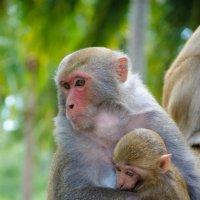 Вьетнам. Ня Чанг. Северные острова-остров обезьян. Февраль 2016г. :: Наталья Александрова