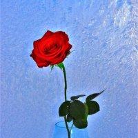 Роза на замёрзшем окне :: Сергей Чиняев
