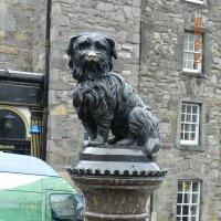 Собака Боби, которая 14 лет охраняла могилу хозяина :: Лев