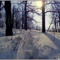 Мартовский снег :: Андрей Заломленков