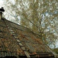 Осень :: Федор Пшеничный