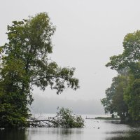 Туманная осень :: Алёнка Шапран