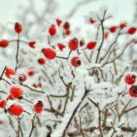 Словно стая снегирей... :: владимир