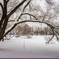Зимний пейзаж :: Юрий Бутусов