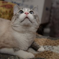 Котик :: Полина Бесчастнова