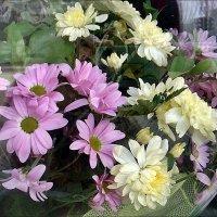 Хризантемы за стеклом :: Нина Корешкова