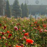 розы. :: Татьяна Найдёнова