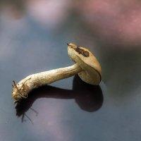 Первый гриб :: Александр Коликов