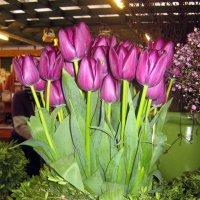 C Праздником всех прекраснейших дорогие дамы! :: Наталья Александрова