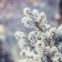 Снежный пух :: Оксана Летняя