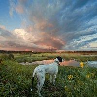 Даже собаке нравится... :: Надежда Коломиец