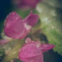 цвет во льду 2 :: Максим