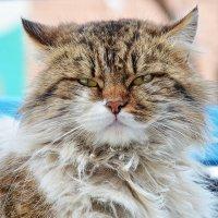 Мартовский кот :: Paparazzi