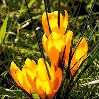 Весна !!!!!! :: Alexander Andronik