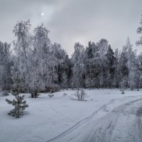 Холодно :: Андрей Дворников
