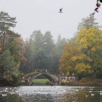 Осенний туман :: Алёнка Шапран