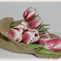 Нежная весна ... :: Татьяна