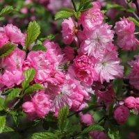 Весна :: Мария Кухта