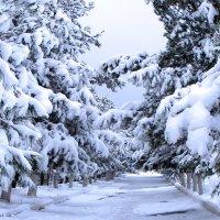 Последний снег :: Юрий Захаров