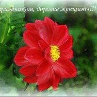 С Днем 8 Марта!!! :: Вячеслав Минаев