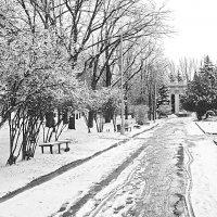 Черно-белая зима :: Александр Бурилов