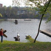 Весна на реке :: Вера Щукина