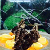 Райский сад бабочек. :: Анастасия Глезерис
