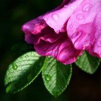 пусть будут сегодня  цветы.... :: Валерия  Полещикова