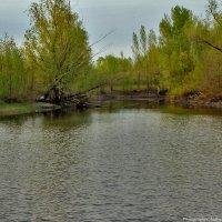 Красивый пруд :: Андрей Ситников