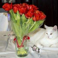 С праздником весны! С 8 марта! :: Виктор М