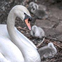 Мама и дети... :: Любовь Анатольевна