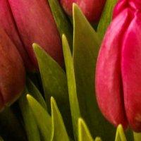 тюльпаны :: Любовь Анатольевна