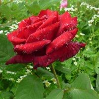 В этот весенний праздник всем женщинам море цветов и весеннего праздничного настроения! :: Павлова Татьяна Павлова