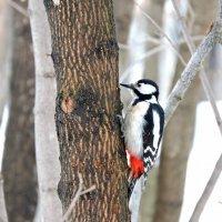В мартовском лесу :: Ната Волга