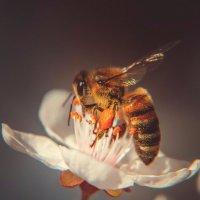 Весна :: Олеся Енина