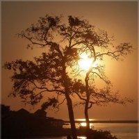Ловушка для солнца :) :: Эля Юрасова