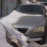 Первые подснежники уже появляются :: Николай Сапегин
