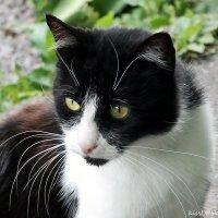 Кот, встреченный мной в Ботаническом Саду.. :: Elena N