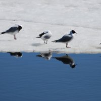в рядок :: linnud