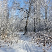 Снег и мартовское солнце :: Мария Кухта
