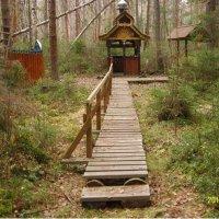 Обустроенный лесной родник за деревней Новошино :: Виктор Мухин