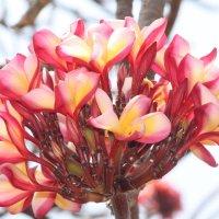 цветы Индии :: maikl falkon