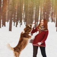 Зимняя фотосессия в лесу с хаски :: Лилия Абзалова