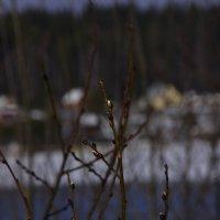 первые  признаки весны :: petyxov петухов