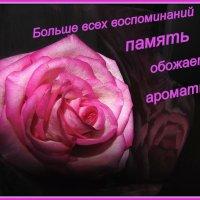 Открытка . :: Мила Бовкун