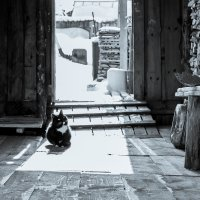 Солнце  и кот... :: maxihelga ..............