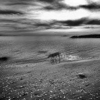 Seashore :: Yuri Shepelev