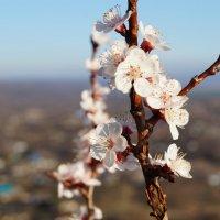 весна... :: Альбина