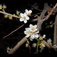 Ночь и ...Весна!! :: Людмила Богданова (Скачко)
